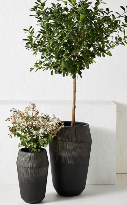 jeva-planter