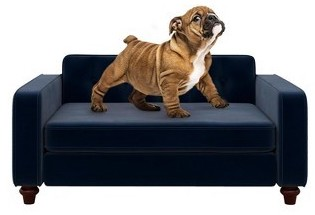 best-dog-couch