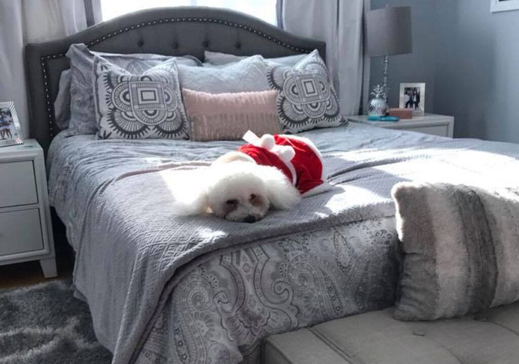 small-dog-couch